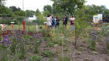Führung durch den Wildbienenschaugarten in Berlin-Treptow